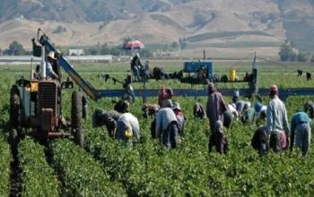Resultado de imagen para jornaleros en los campos de hermosillo