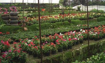 30 mil plantas se cultivan en los viveros municipales cada a o for Viveros en capital
